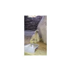 çiftlikköy Satilik tavuk civciv pilic